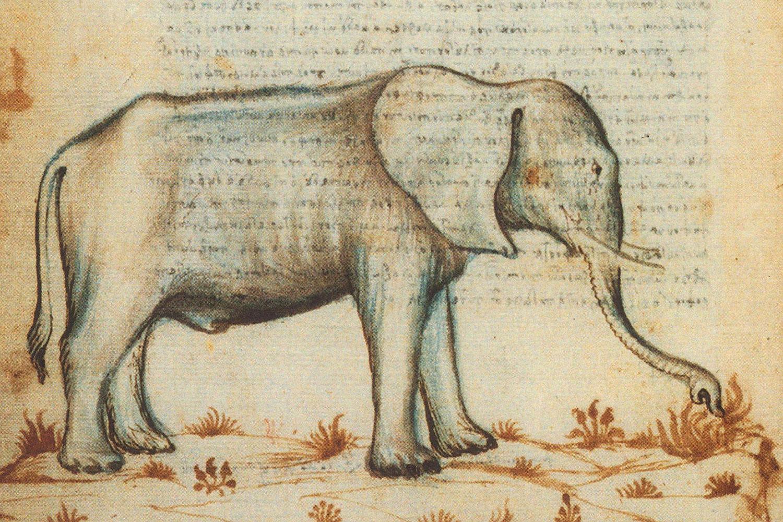 Ciriaco d'Ancona Elefante